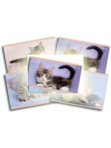 Альбом для рисования 12 листов Rachael Hale KITE R16-241-2